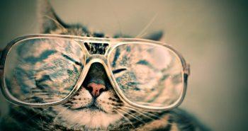 מולטיפוקל: כבר ממש לא רק במשקפיים